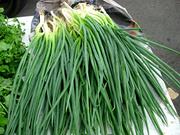 Продаю зеленый лук оптом с доставкой!