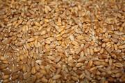 Купим на экспорт пшеницу 2,  3,  4,  5,  6 класса.