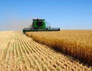 Купим пшеницу,  ячмень,  кукурузу,  подсолнечник,  рапс,  сою,  горох