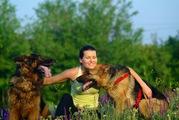 щенки немецкой овчарки Николаев