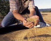Закупаем Зерновые и масличные культуры, удобная для Вас форма оплаты  .