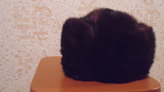 Продаю шапку норки