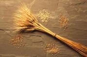 Куплю! Пшеницу! По всей Украине! Соя! Подсолнух! Жмых!!