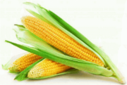 Куплю кукурудзу