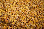 Куплю кукурузу,  сорго,  зерноотходы,  просроченный посевной,  Николаев