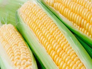 Куплю кукурудзу. Продати кукурудзу.