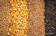 Закупаю зерновые на постоянной основе  вся Украина
