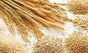 Пшениця,  ячмінь,  ріпак,  горох куплю з місця